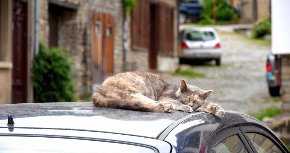 cat-sleep-car.jpg