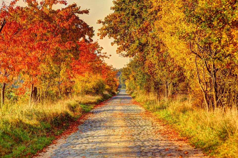 autumn track.jpg